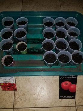 Tomatoes L. Scott 3.17.18